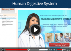 human digestive slide